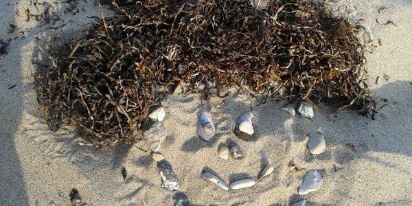 lise-strand-sten